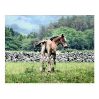 HORSES POSTCARD