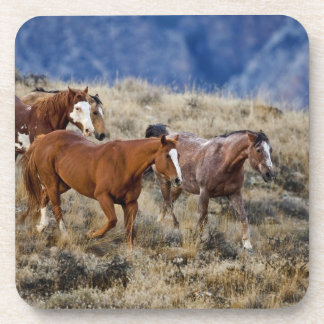 Horses roaming the scenic hills of the Big Horn 2 Beverage Coasters