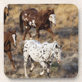 Horses roaming the scenic hills of the Big Horn Drink Coaster