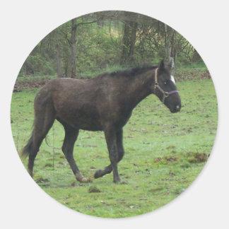Horses! Round Sticker