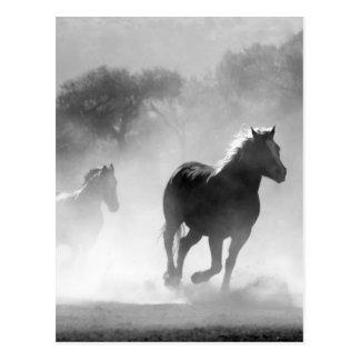 Horses running black and white beautiful scenery postcard