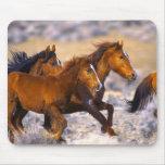 Horses running mouse mats