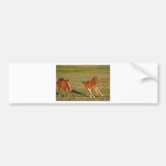 Horses Running Wild Bumper Sticker