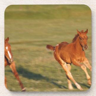 Horses Running Wild Coaster
