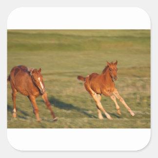 Horses Running Wild Square Sticker