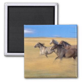 Horses | Seneca, Oregon, USA Magnet