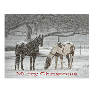 Horses Standing In Snow Wish You Merry Chrsitmas Postcard