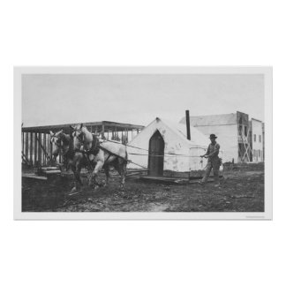 Horses Tent Anchorage 1916 Poster