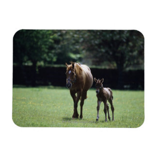 Horses - Thoroughbred, Mare And Foal, Rectangular Photo Magnet