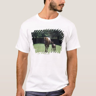 Horses - Thoroughbred, Mare And Foal, T-Shirt