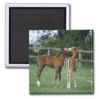 Horses - Thoroughbreds, Foals, Square Magnet
