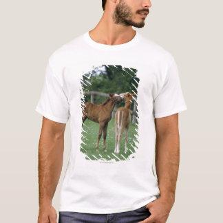 Horses - Thoroughbreds, Foals, T-Shirt