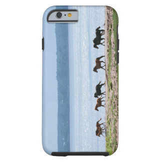 Horses Tough iPhone 6 Case