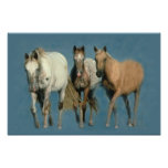 Horses Wild and Wonderful Print