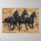 Horses Wild Print