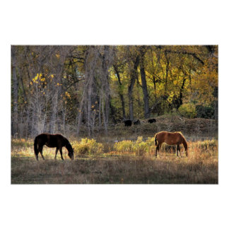 Horses with Bears in Background Photo Poster