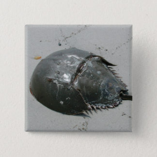 Horseshoe Crab 2 Inch Square Button