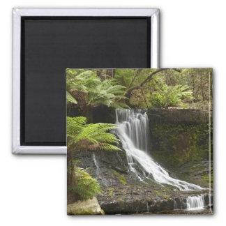 Horseshoe Falls, Mount Field National Park, Square Magnet
