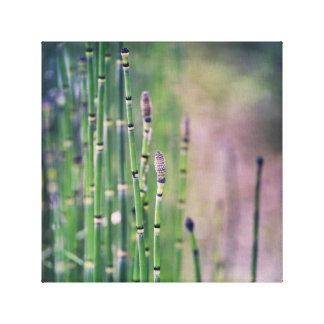 Horsetail Grass Soft Green and Mauve Nature Canvas Print
