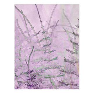Horsetail Grass/Stems Postcard