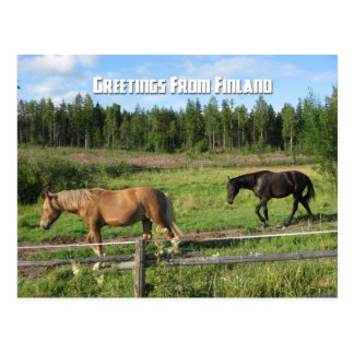 Horsing around in the Finnish Countryside Postcard