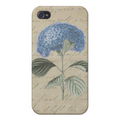 Hortensia bleu vintage avec la calligraphie antiqu étui iPhone 4