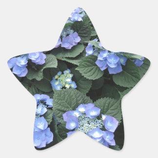 Hortensia Star Stickers