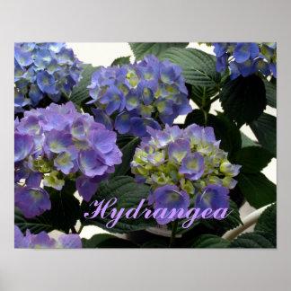 Hortensias français de bleus layette posters