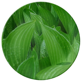 Hosta Leaves with Raindrops Porcelain Plate