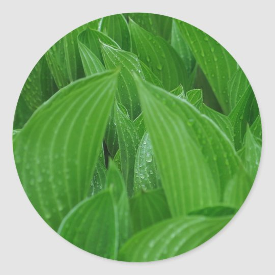 Hosta Leaves with Raindrops Stickers