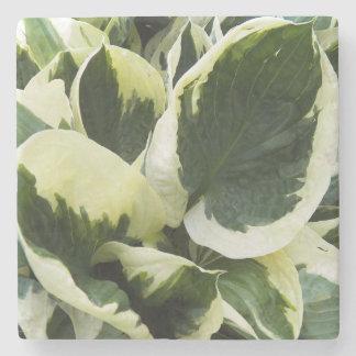 Hosta Plant Floral Stone Coaster