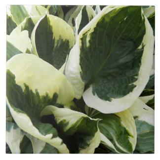 Hosta Plant Floral Tile