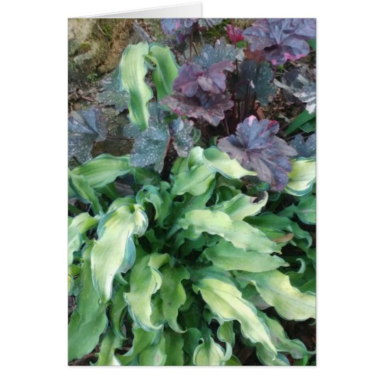 Hostas and Coral Bells Card