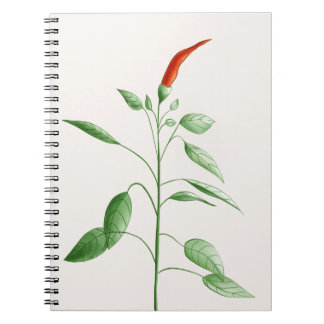 Hot Chili Pepper Plant Botanical Illustration Notebook