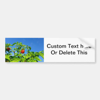 hot peppers on plant sky back 2 bumper sticker