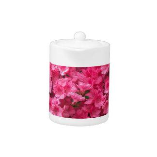Hot Pink Azalea Blossoms