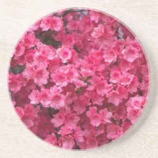 Hot Pink Azalea Blossoms Drink Coaster