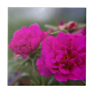 Hot pink begonia flowers tiles