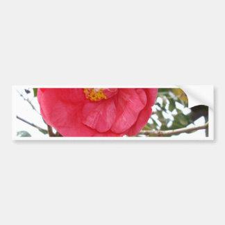 Hot_Pink_Camellia,_ Bumper Sticker