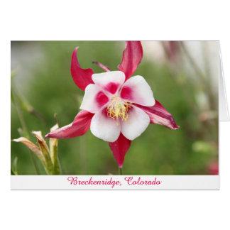 Hot Pink Columbine Card