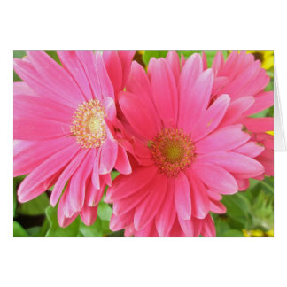 Hot Pink Daisy Note Card