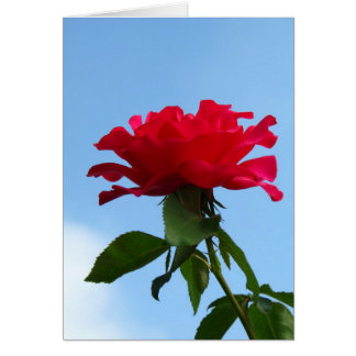 Hot Pink Flower Greeting Card