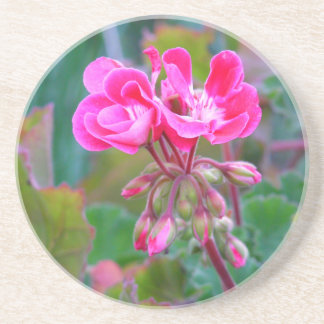 Hot pink flowers beautiful colorful garden photo coaster