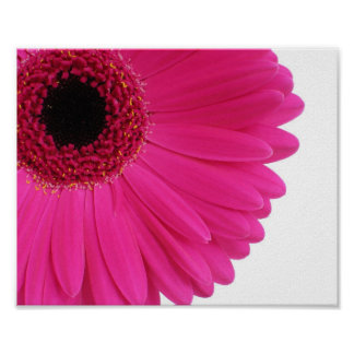 Hot Pink Gerbera Daisy Close-up Poster