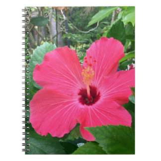 Hot Pink Hibiscus Notebooks