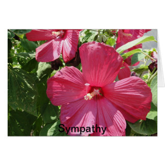 Hot Pink Hibiscus, Sympathy Card