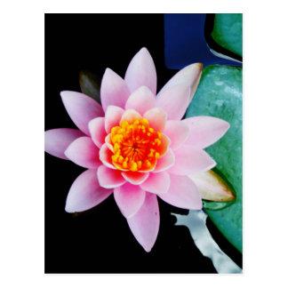 Hot Pink & orange lotus water lily flower Postcard