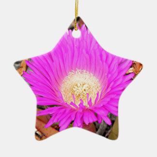Hot pink Pigface flower in bloom 2 Ceramic Star Ornament
