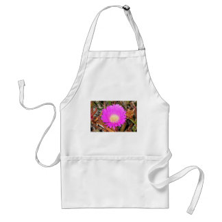 Hot pink Pigface flower in bloom 2 Standard Apron
