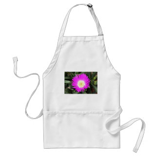 Hot pink Pigface flower in bloom Standard Apron